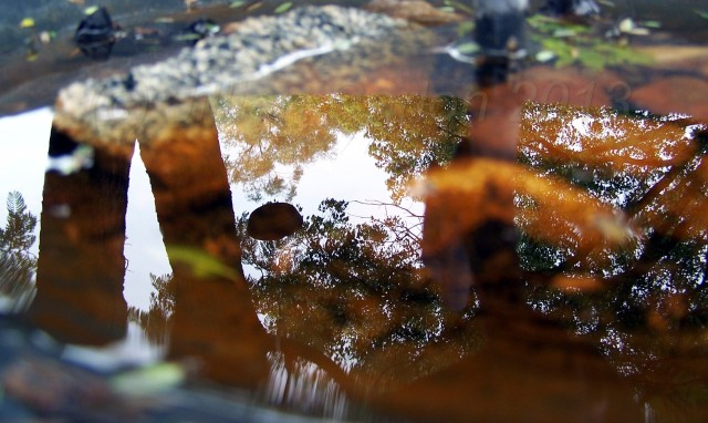 The recent rain has over filled the birdbath with water. I just love the reflection of the tree.